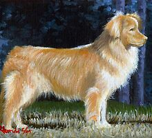 Nova Scotia Duck Tolling Retriever by Oldetimemercan