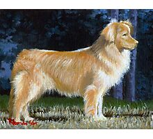 Nova Scotia Duck Tolling Retriever Photographic Print