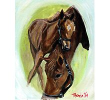 Mare And Foal Portrait Photographic Print