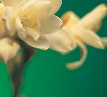 Tuberose by AllerBeauchamp