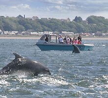 Dolphins at Chanonry Point  by Sandy Sutherland