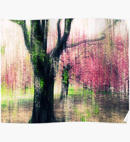 Cherry Tree Impressions Poster