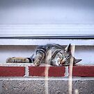 Catnap on the Front Stoop by Mikell Herrick
