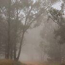 Country road in fog by julie anne  grattan