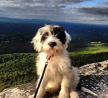 Mountain Pup by oneshadeofgrey