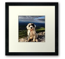 Mountain Pup Framed Print