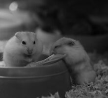 Hamsters Enjoying the Twillight by Cathynium Photos