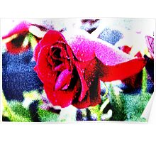 Colourful Rose Poster