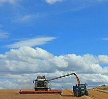 Harvest, Black Isle by Sandy Sutherland