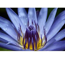 Fiji Water Lilly Photographic Print