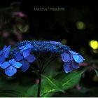 Midnight in the Garden  by Karen E Camilleri