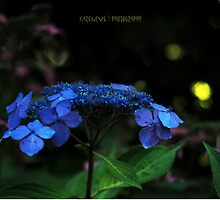 Midnight in the Garden  by Karen E Camilleri