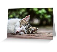 Drowsy Kitten Greeting Card