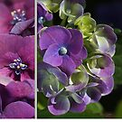 Hydrangeas Of Summer by Joy Watson
