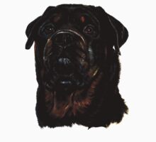 Male Rottweiler by taiche