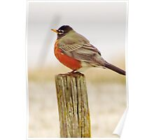 Robin on a Post Poster