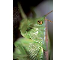 Grasshopper portrait © PH. Max Facchinetti  Photographic Print