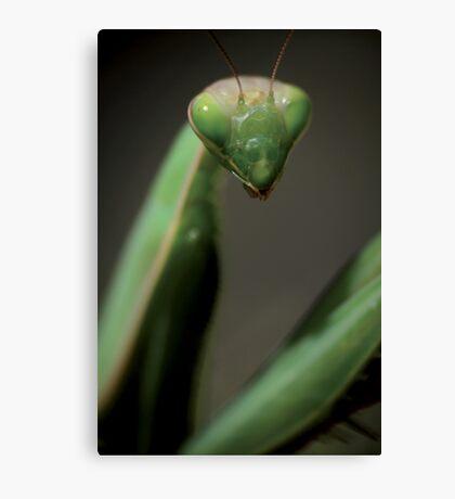 Praying mantis portrait © PH. Max Facchinetti  Canvas Print