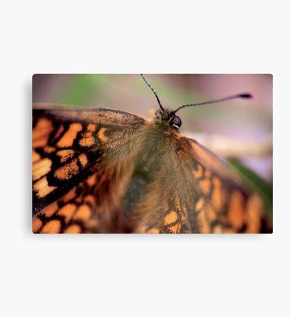 Butterfly © PH. Max Facchinetti  Canvas Print