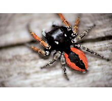 Orange mini spider © PH. Max Facchinetti  Photographic Print