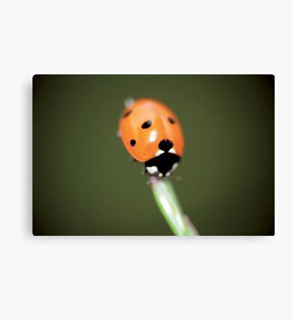 Lonely ladybug © PH. Max Facchinetti  Canvas Print