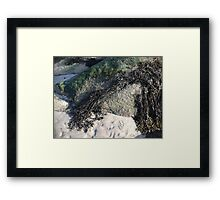Seaweed On The Rocks At Low Tide Framed Print
