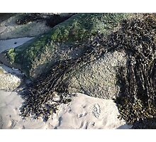 Seaweed On The Rocks At Low Tide Photographic Print