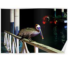 Brown Pelican In The Galapagos Islands Of Ecuador Poster