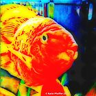 Pop Art Love Fish by Kater