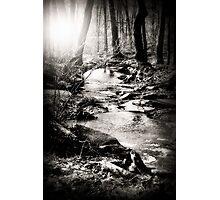 Deep Forrest Stream Photographic Print