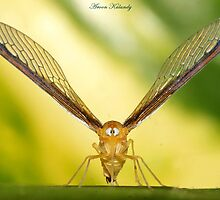 Wing Spread........... by AroonKalandy