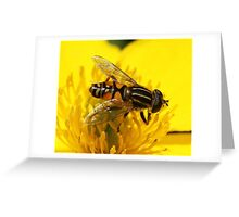 Mr Stripey - hover fly Greeting Card