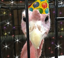 Happy Birthday Turkey by PhotoMel