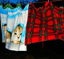 Cats Blankets by Forfarlass