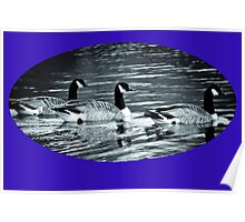 Three Canada Geese ........ Poster