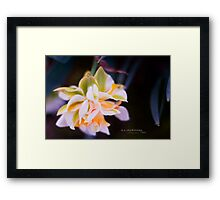 Not pink, but lovely... Framed Print