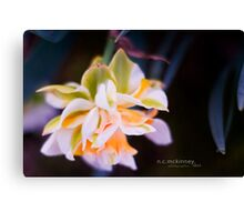 Not pink, but lovely... Canvas Print