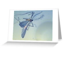 Bluefly Greeting Card