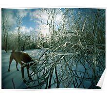 Ice Storm Dog, Hinesburg, Vermont Poster