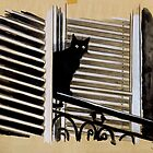 black cat by Loui  Jover
