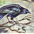 Corvus capensis by Maree Clarkson