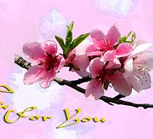 Peach Blossom Just for You by Dennis Melling