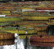 Waterlily Pond Sticker