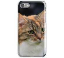 Fluffy Ginger and White Cat iPhone Case/Skin