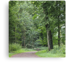 Lush Green Forest Canvas Print