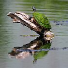 Turtle Reflections by jozi1