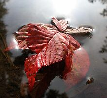 Fall by RickVink