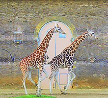 Running Giraffes by Barnbk02