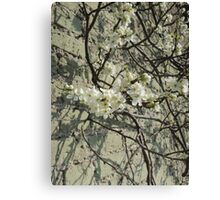 Blossom Wall Canvas Print