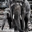 Elephant and Baby by LucyOlver